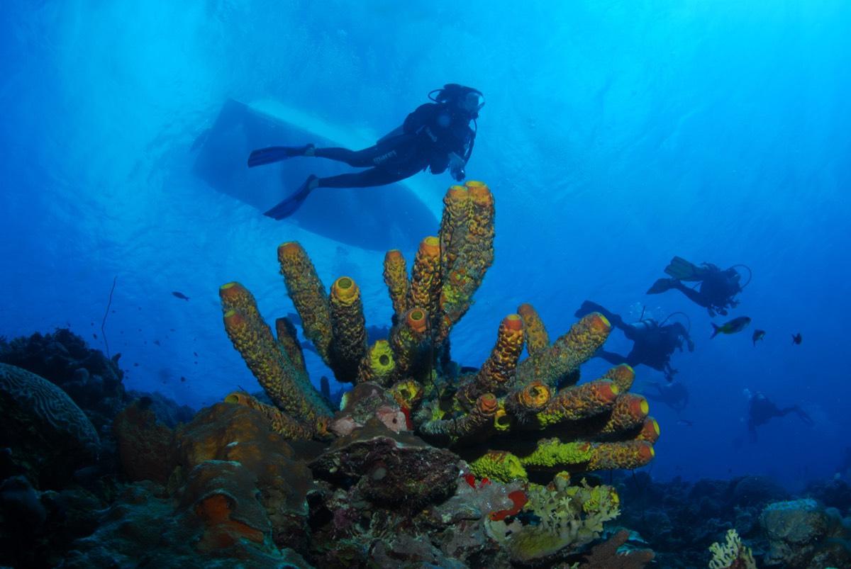 Bonaire16