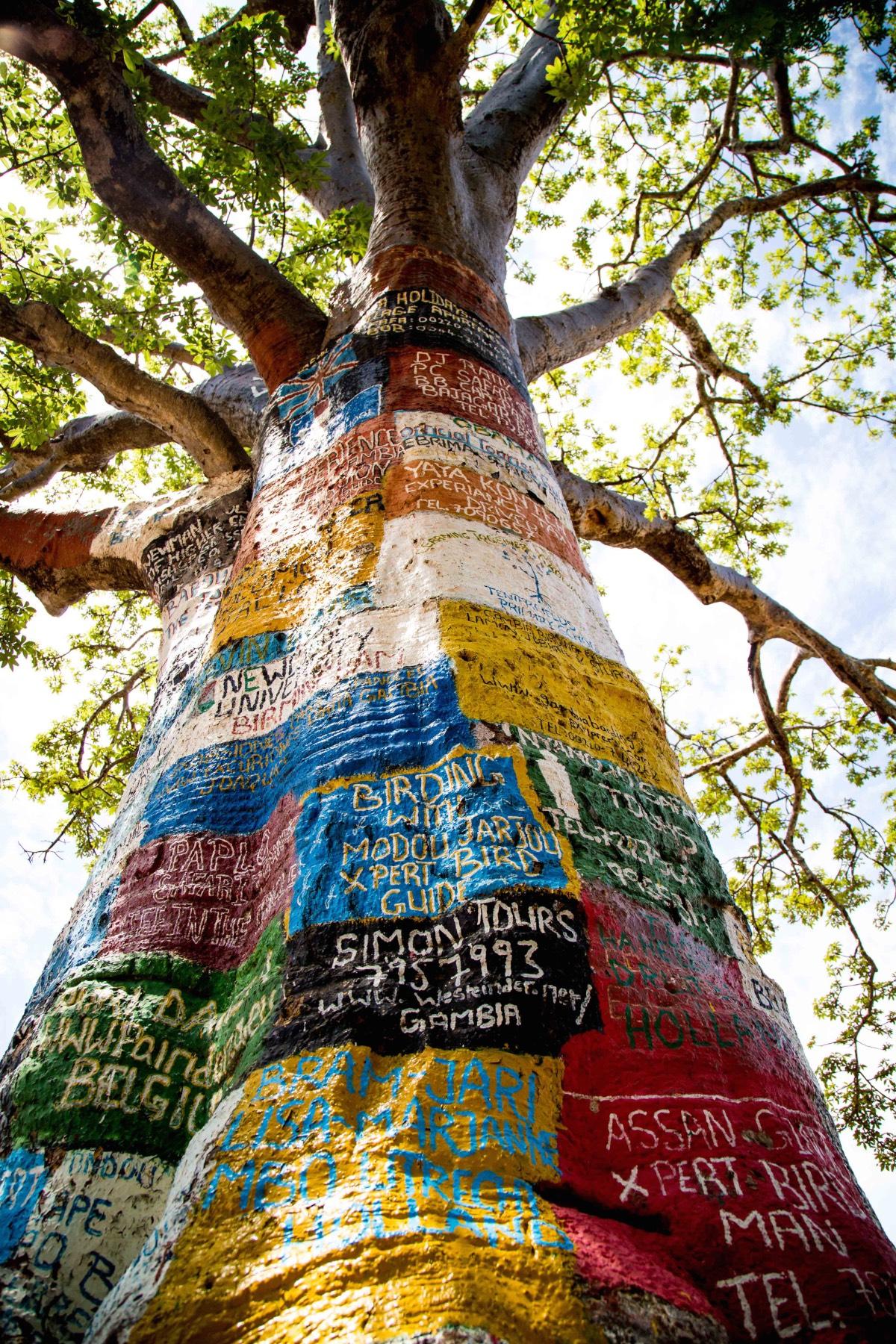 Gambiainternet tree 1