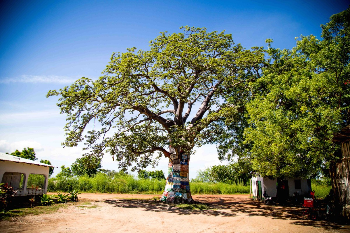 Gambiainternet tree 2