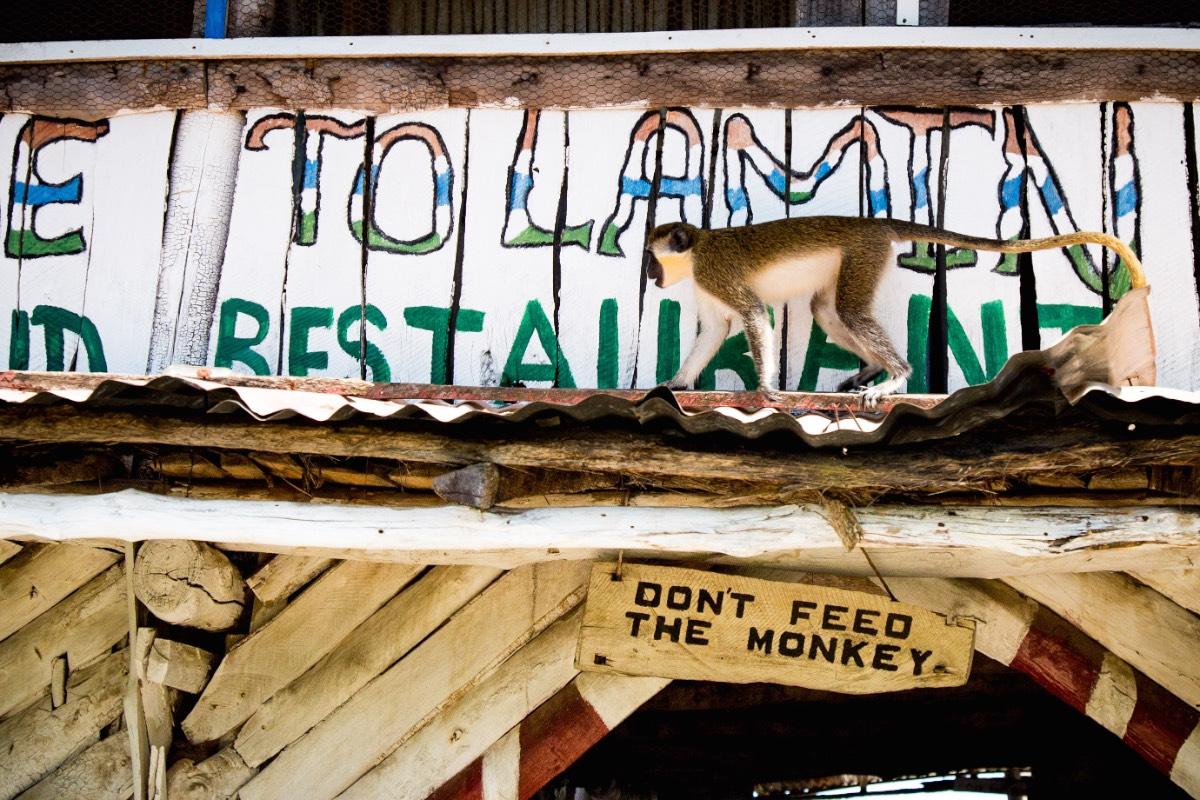 Gambialamin lodge 3