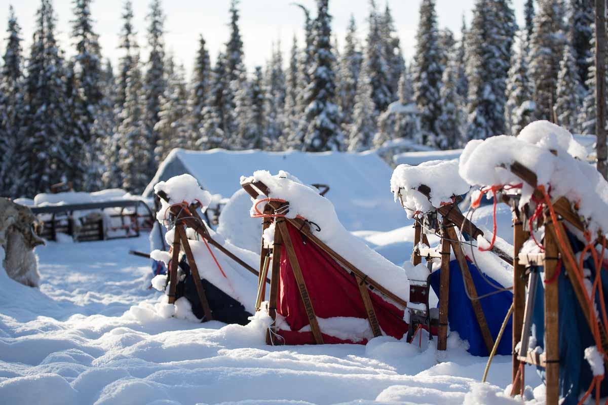 Noord_Zweden_hondenslede-5096-2