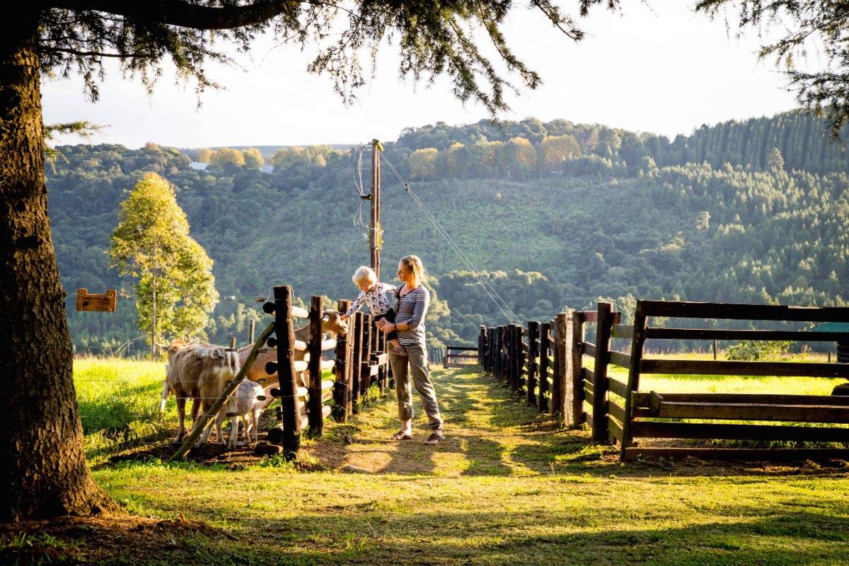 Midlands_midlands goat farm-12