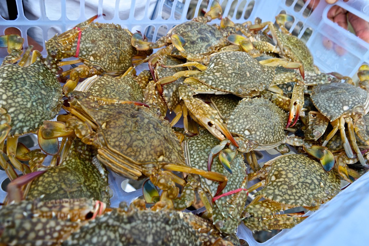 Phang_Nga_crab-bank