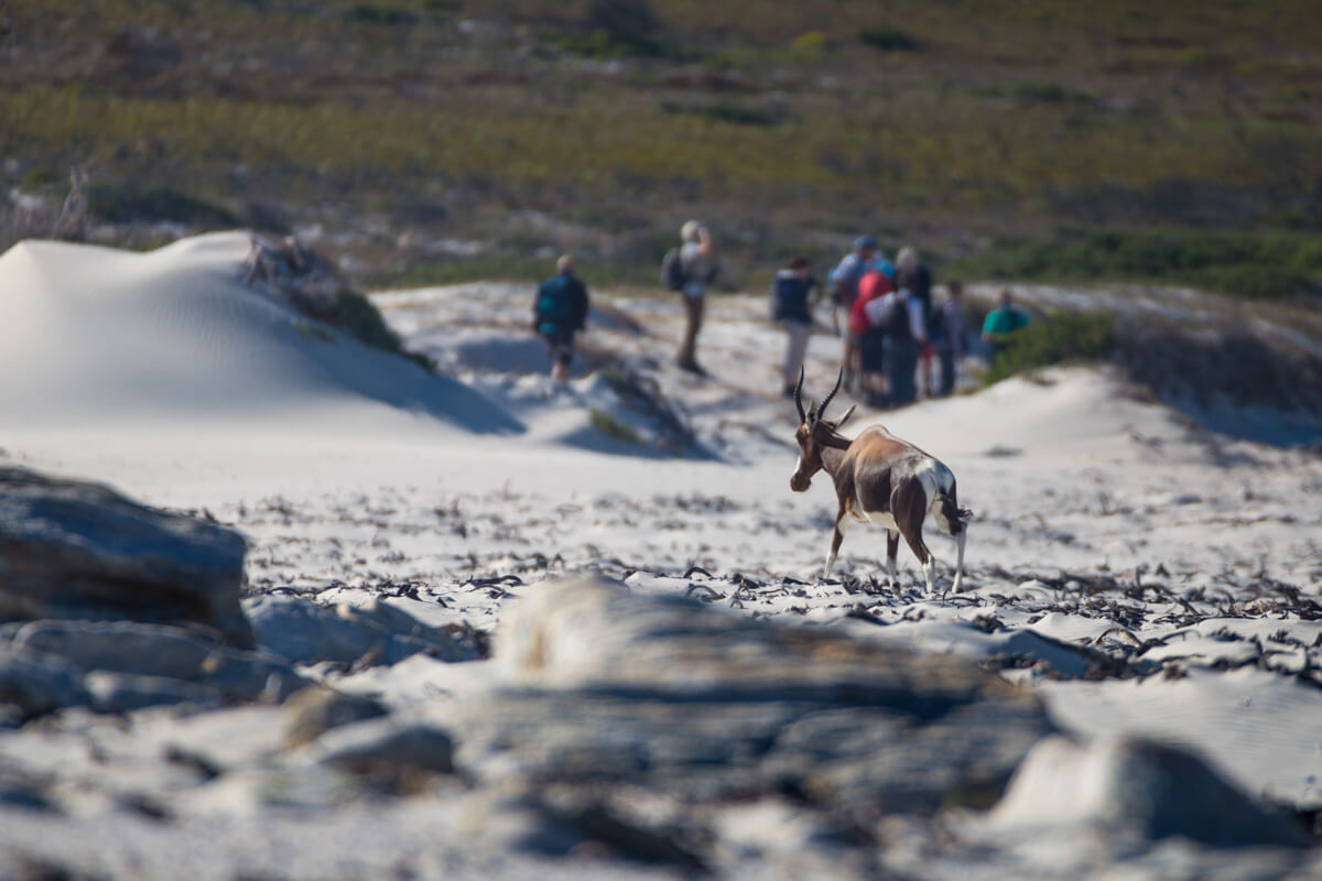 Kaap de Goede Hoop dieren