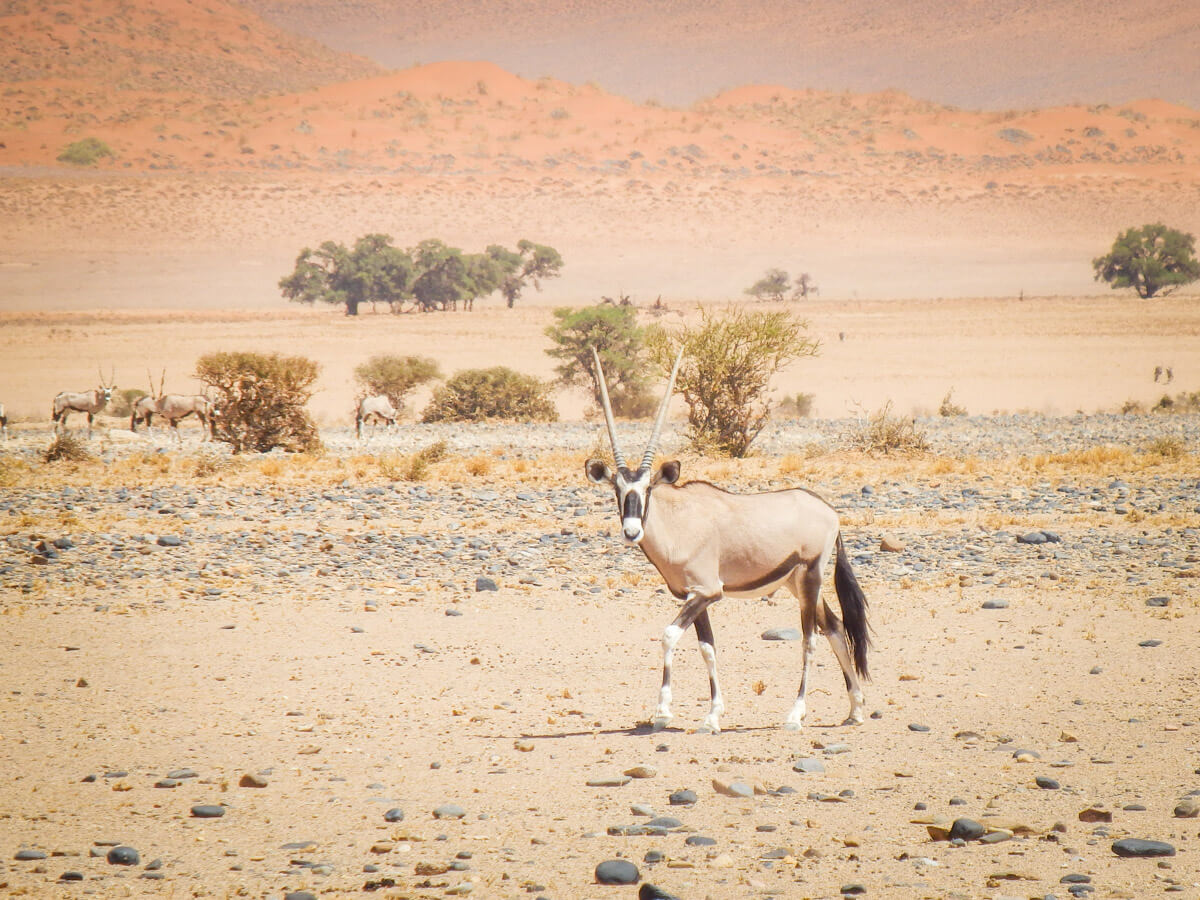 Namibie roadtrip