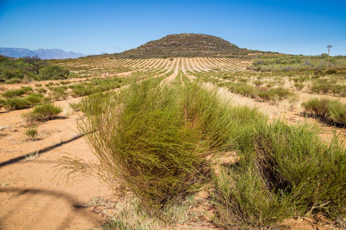 reizen Lamberts Bay Zuid-Afrika