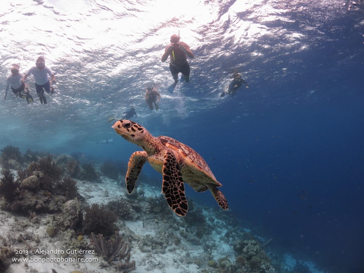 Bonaire22
