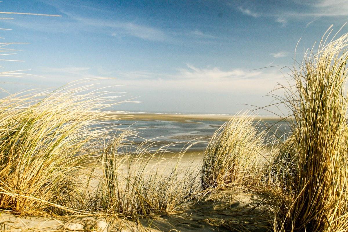 Ameland duinen copy