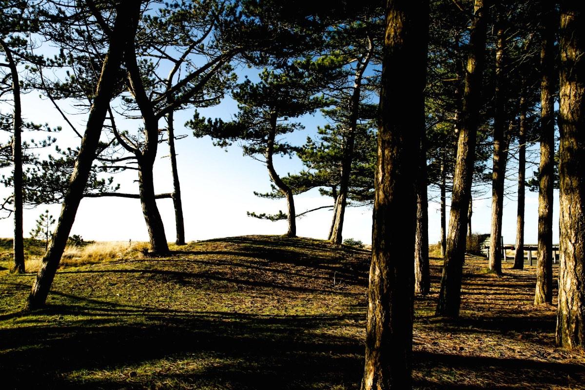 Het Hollumer Bos bij vuurtoren Ameland copy