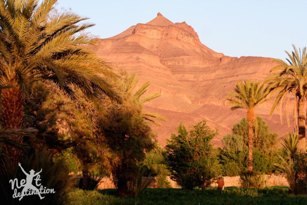 koel, groen landschap nabij woestijn_marokko