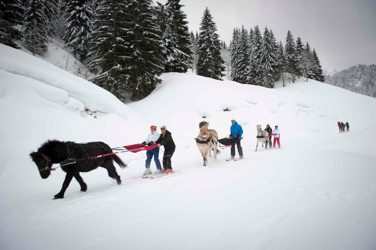 Ski-joëring2