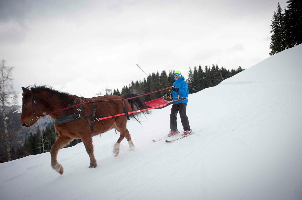 Ski-joëring6