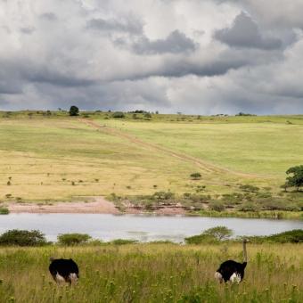 01 wildlife spotten Tala Game Reserve.jpg