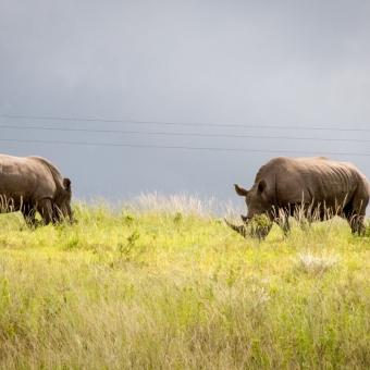 01 wildlife spotten12 Tala Game Reserve.jpg