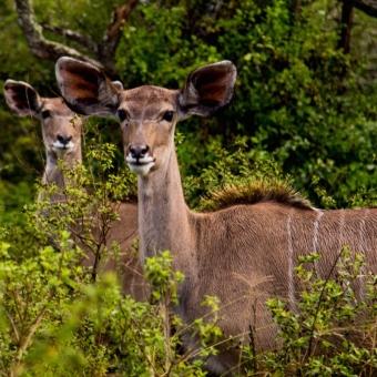 01 wildlife spotten15 Tala Game Reserve.jpg