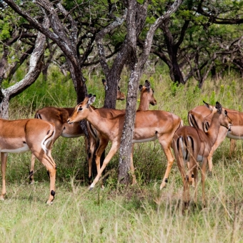 01 wildlife spotten3 Tala Game Reserve.jpg