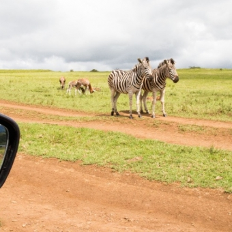 01 wildlife spotten7 Tala Game Reserve.jpg