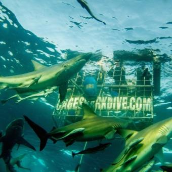shark dive-01