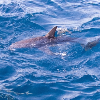 shark dive-11