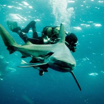 shark dive-5