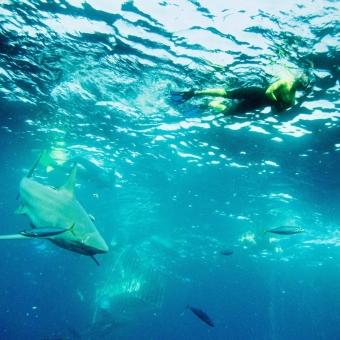 shark dive-6