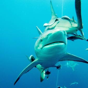 shark dive-7
