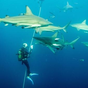 shark dive-8