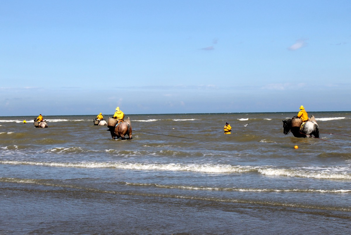 Vlaamse kust15